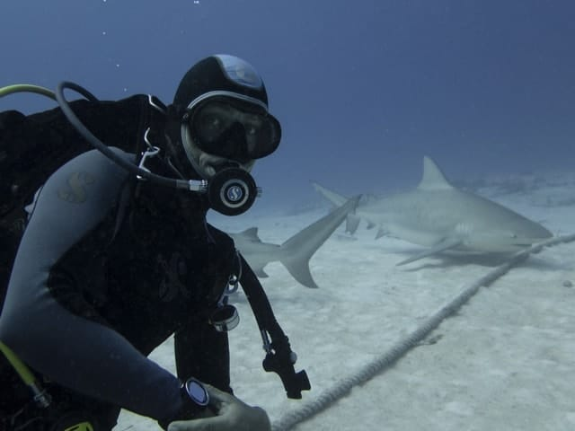 Diving with Bull sharks