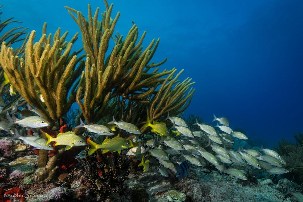 Discover Scuba Diving Mexico