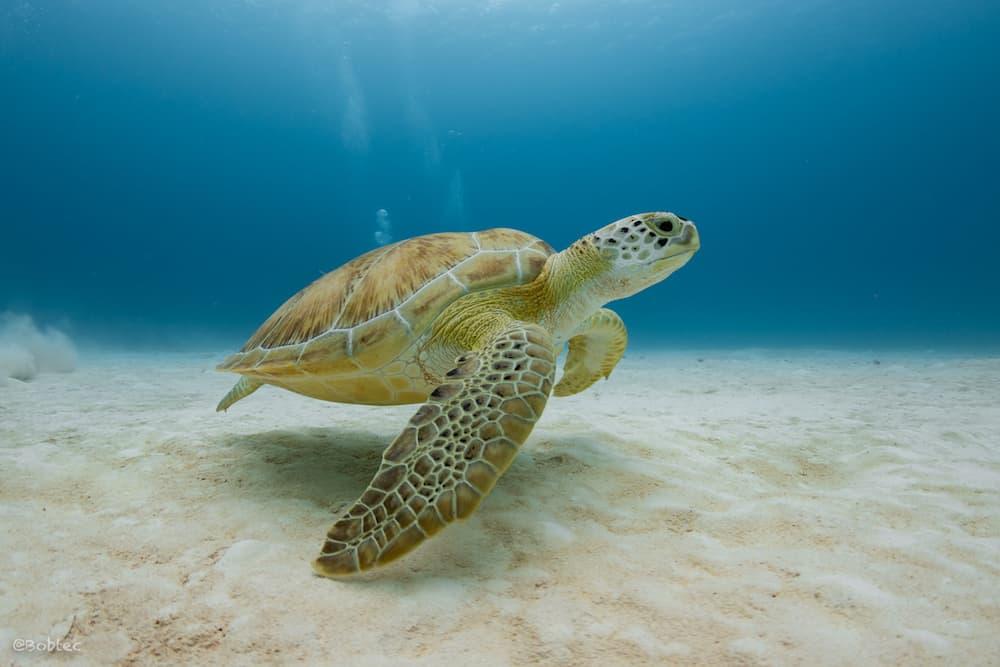 Schildkröte Mexiko