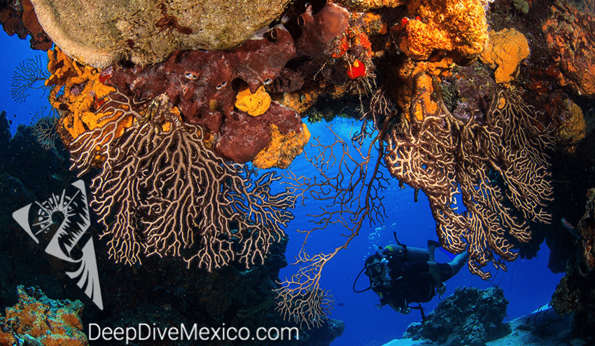Diving on Cozumel