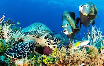 Schildkröte auf Cozumel