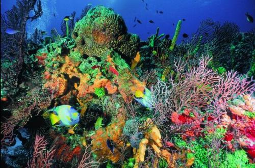 22474618-charter-mexico-yucatan-cozumel-korallen