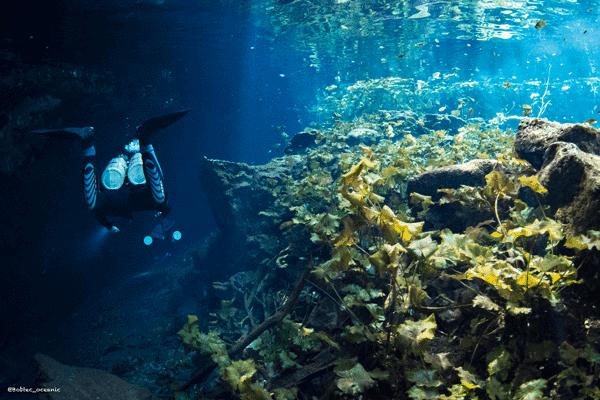 Cenote tauchen
