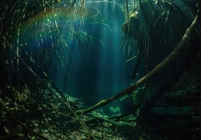 Cenote El Eden Mangrove