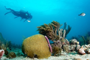 Diving in Playa del Carmen at Chunzumbul Reef