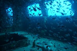 Wreck Diving in Playa del Carmen at Mama Vina Schipwreck
