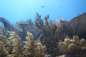 Deutsche Tauchschule in Playa del Carmen, Tauchen in Playa del Carmen, Barracuda