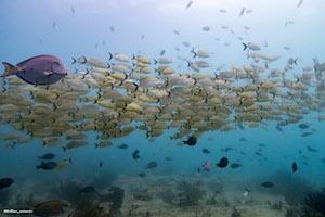 Diving in Playa del Carmen Jardines Reef