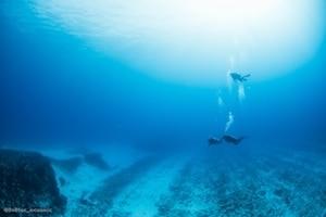 Diving in Playa del Carmen at Pared Verde