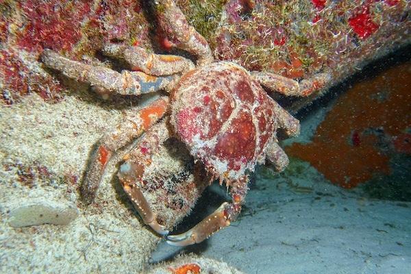 Unterwasser Fotografie Tipps und Tricks